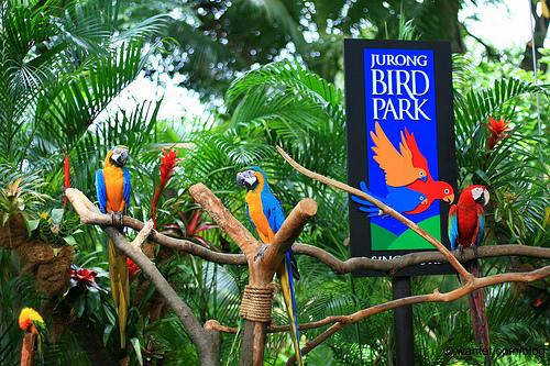 Kết quả hình ảnh cho jurong bird park