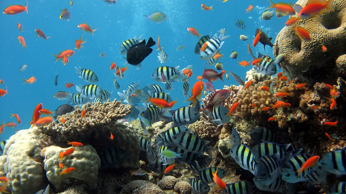 Sắc màu lung linh tại đại dương đảo Phú Quốc